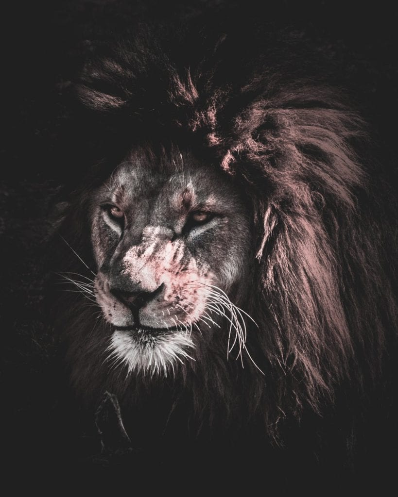 Lion Tattoo: Get To Know About Its Ideas & Meaning